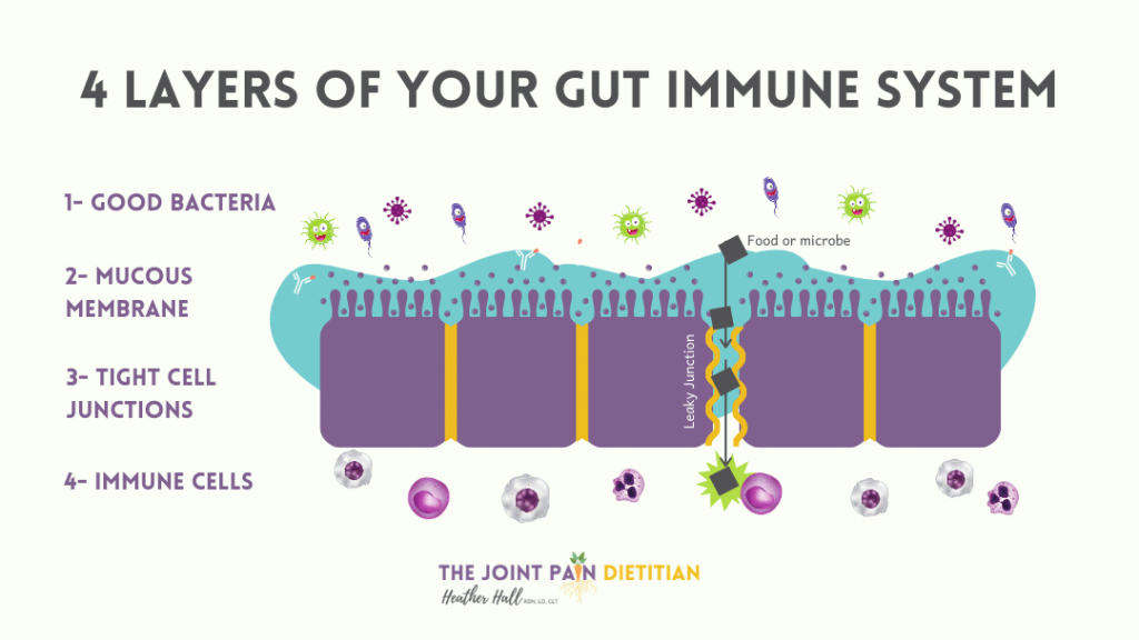 4 Layers of Gut Immune System